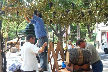Madeira Wine 2007/Making Of