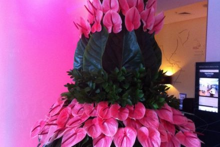 Madeira Flower&Wine Show/ Chelsea 2013