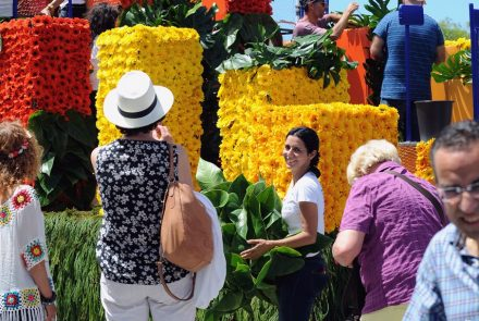 Madeira Flower Festival 2017/Float Flowers/Making of